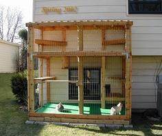 Cat yard